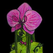 Orchid Alraune