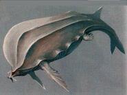 Concept-Whale