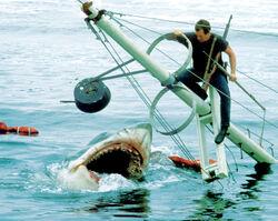 Jaws-Brody.jpg