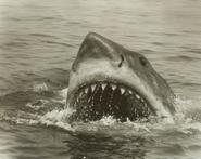Jawsblack