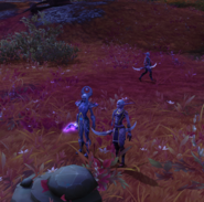 Celeenia outside Suramar