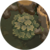 Forest Bushes.png