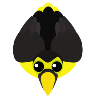 Old Choco Toucan