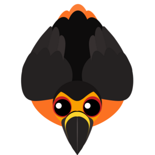 Old Lava Toucan