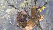 Eagle attacks bees boi