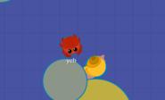 Crab near Snail