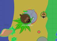 Wolverine on tree