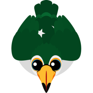 Pakistan Toucan