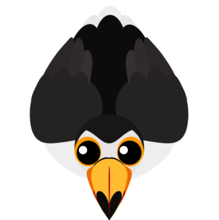 Old Toco Toucan
