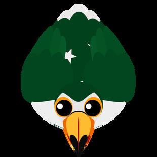 Oldest Pakistan Toucan