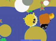 Yellow Puffer1