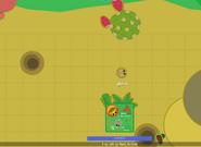 Desert Rat-spawn