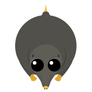 Gold Trimmed Mole