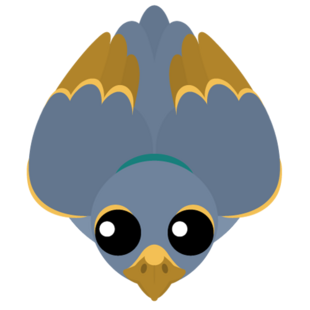 Gold Trimmed Pigeon