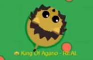 Old black maned lion design