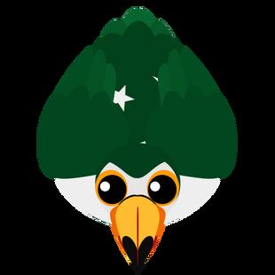 Old Pakistan Toucan