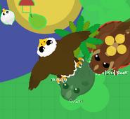 Eagle grabs the black rhino eagle skin
