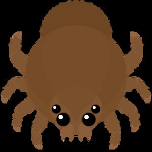 Goliath Spider