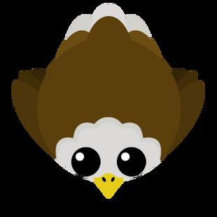 Older Bald Eagle