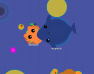Blue Whale and Octo