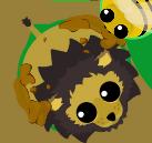 Black Maned Lion Covered In Mud
