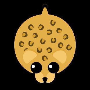 Oldest Leopard