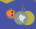 Poor Seal