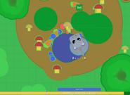 Pygmy-Hippo