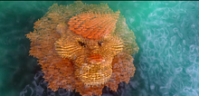 Fishy Lion.png
