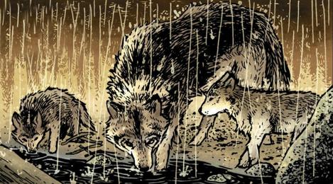 Wolf Gallery B
