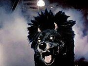 Devil Dog.jpg