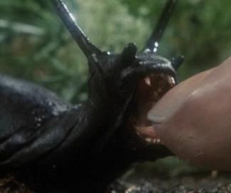 Black Slugs