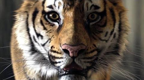 Life of Pi Schiffbruch mit Tiger - Making-of (Deutsch German) HD