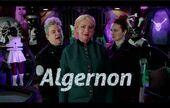 Algernon.jpg
