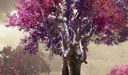 JASPERA TREES.jpg