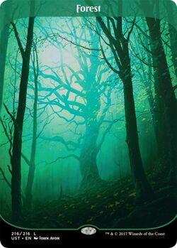 UST Forest.jpg