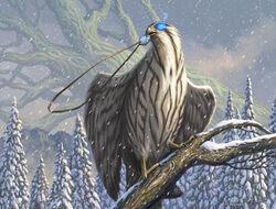 Pilfering Hawk.jpg
