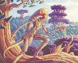 Yavimayan elf.jpg