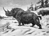 Wooly rhino.png