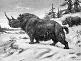 The Kolyma Wooly Rhinoceros