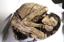 Peruvian mummified male, c.1200-1400 Wellcome L0035650.jpg