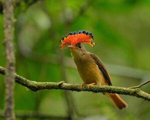 Phoca thumb l Aves20.jpg