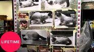 Grumpy Cat at Jim Hensons Creature Shop