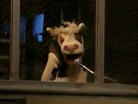 Cow announcer.jpg
