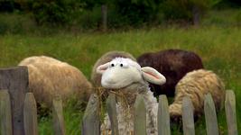 EineMöhreFürZwei-ZurückZuDenWurzeln-Wolle