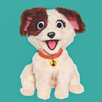 Tango puppy