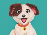 Tango (puppy)