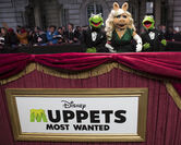 Muppets-Most-Wanted UK-Premiere 011