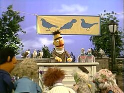 Song.cleanpigeons