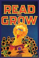 BigBird-READ